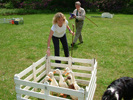 Sheepdog Handling - Activitiy Days from Sport Break
